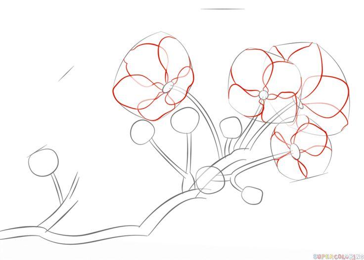 How to draw a cherry blossom step by step. Drawing tutorials for kids and beginners.
