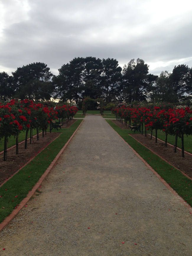 #Rose #Gardens at #Werribee #Mansion #Melbourne