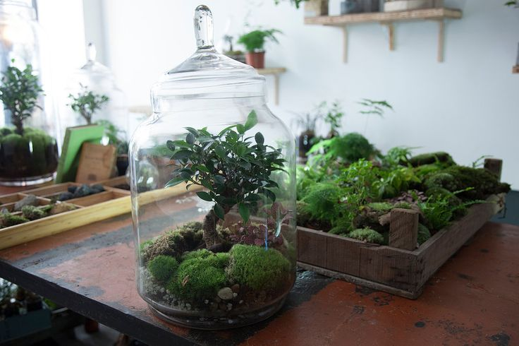 13 best plante sous verre images on pinterest terrariums garden terrarium and plants. Black Bedroom Furniture Sets. Home Design Ideas