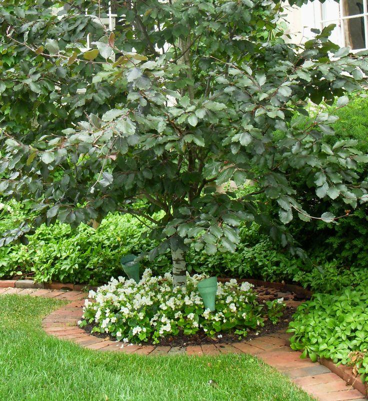 Flower Garden Ideas For Around Trees best 25+ mulch around trees ideas on pinterest | flower bed edging