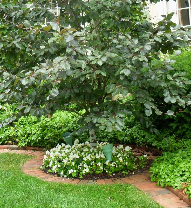 Tips for a low maintenance landscape create a planting for Small trees for flower beds