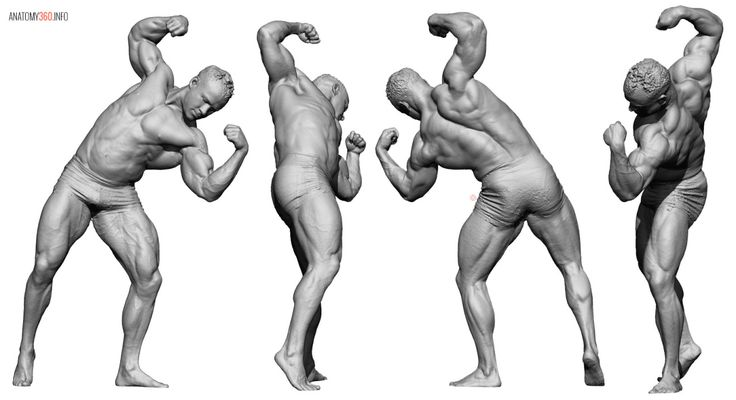 Anatomy 360 — Male weight bearing scans in motion..