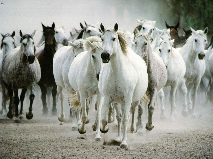 caballos famosos | Por Zeus -exclamó el joven- , pagaré el precio del caballo!