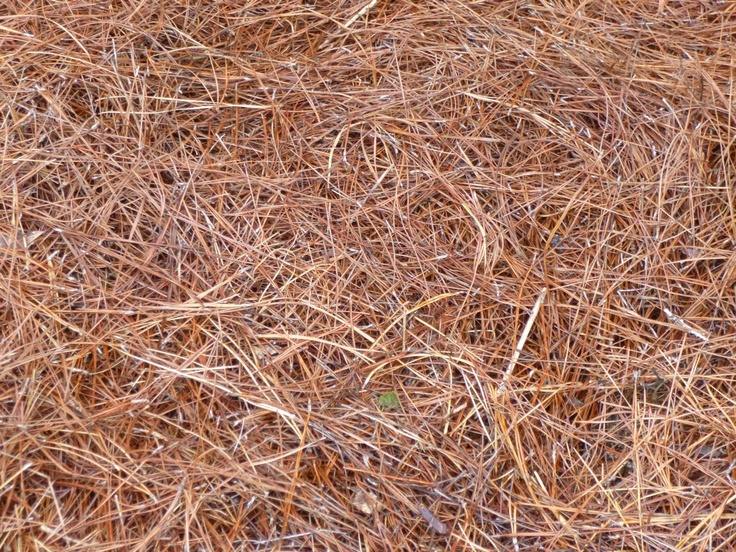 Six Reasons Why Pine Straw Makes The Best Mulch Yard