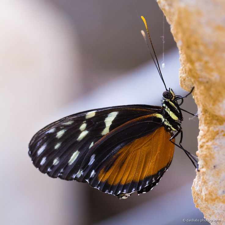 Schmetterling by Babs Helferich on 500px