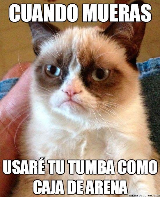 caja de arena de mi gato memes - AOL Image Search Results