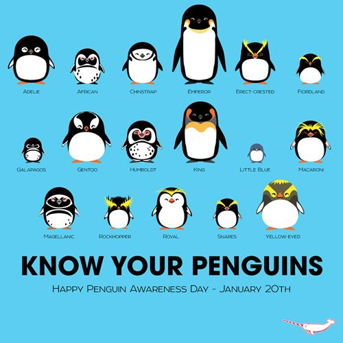 Penguin Awareness Day = Jan. 20th --- Can I have one of the Little Blue ones, please?