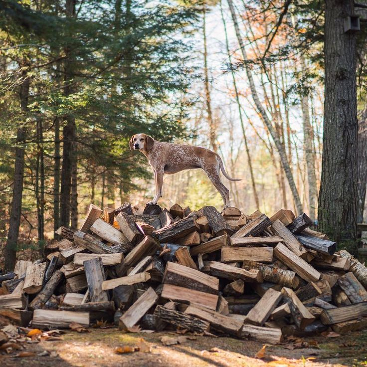 """""""Raise your hand if you wanna help me stack this cord of firewood! ✋"""""""