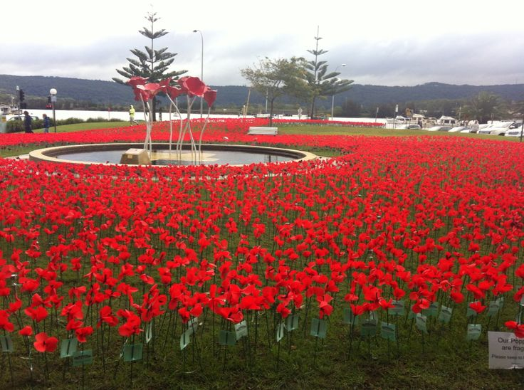 April storm. Gosford memorial park: the poppie project. Survived through Category 2 cyclone winds/storm. A miracle, to stay up for the upcoming Anzac Day