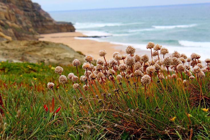 Praia de S.ta Rita  | 2maio2015