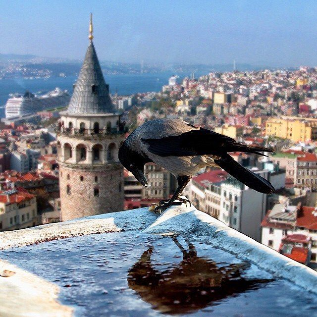 ✿ ❤ Galata Kulesi, İstanbul  Byaglotic