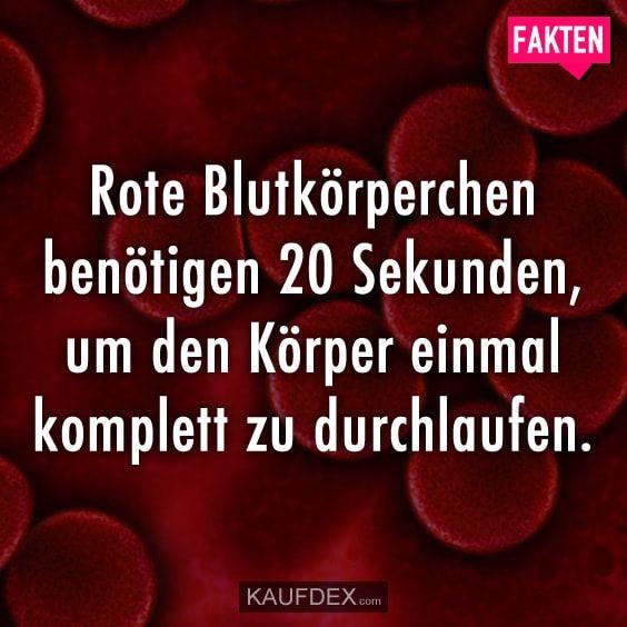 Rote Blutkörperchen benötigen 20 Sekunden, um den Körper