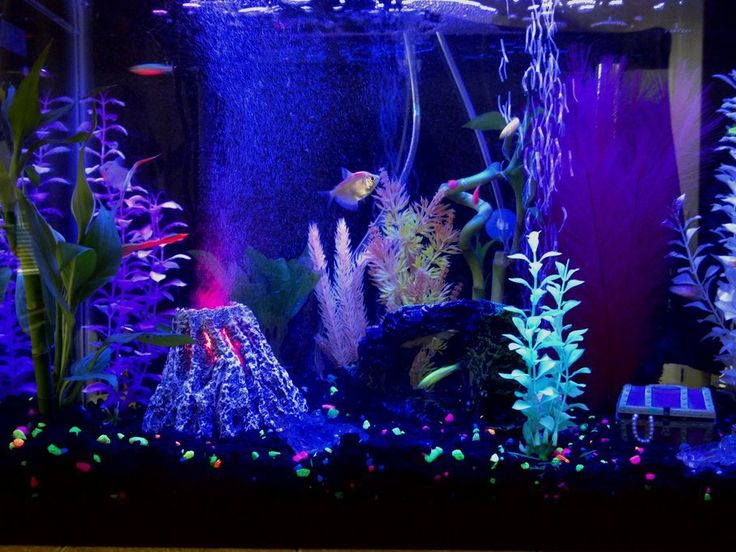 Glofish aquarium. Look at the volcano! Very Finding Nemo ...