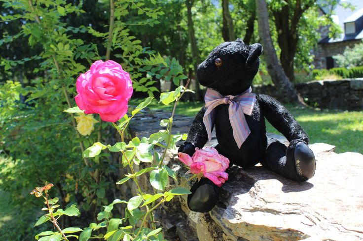 Black fur Teddy Bear wishes to smell the delicate fragance of the roses...