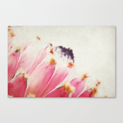 Protea  Stretched Canvas by AD DESIGN Photo + PhotoArt - $85.00