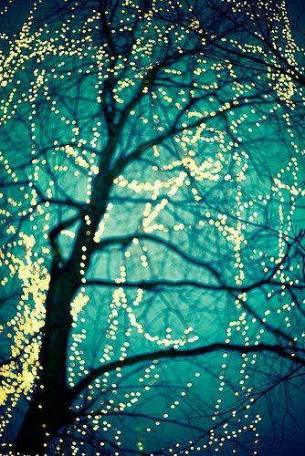Dc Christmas Tree Lighting