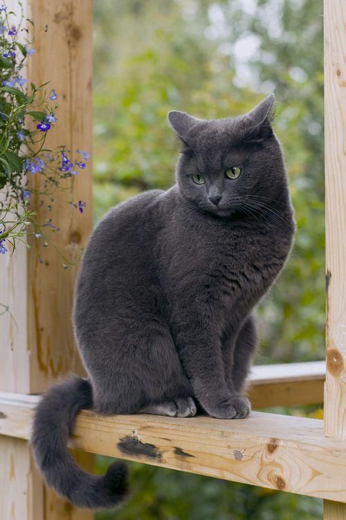 Rainbow Bridge Remembrance Day 5 Ways To Memorialize Your Cat Cute Cats Blue Cats Kittens