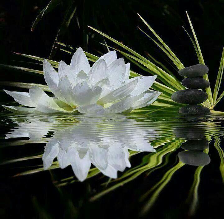 Wallpaper steine blumen  87 besten Simple Flowers Bilder auf Pinterest | Schöne blumen ...