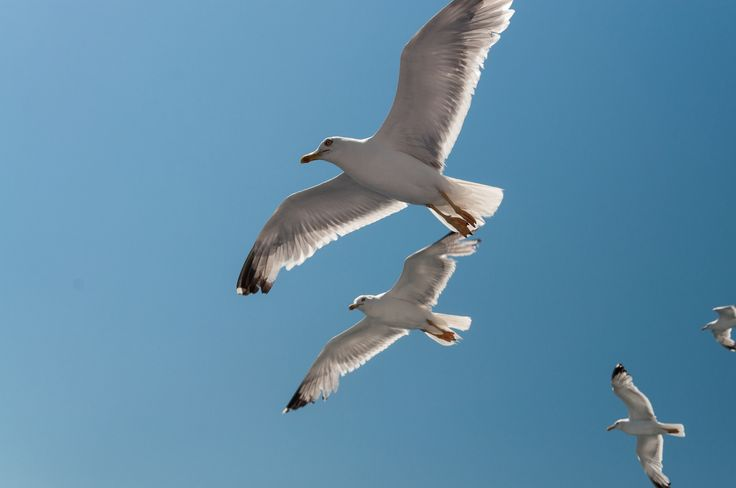 Seagulls by Fabi Nuka on 500px
