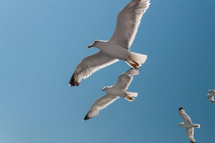 Seagulls by Fabi Nuka on 500px