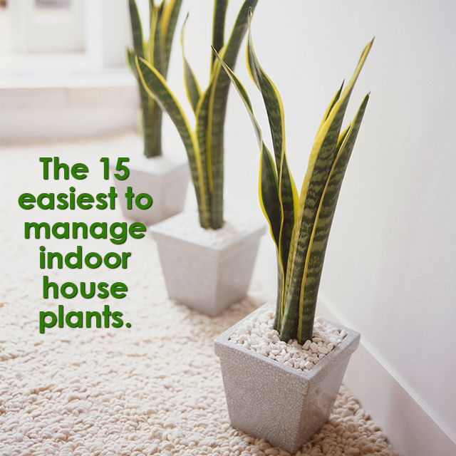 Bring some #life to your #décor with #plantlife! The 15 easiest to manage #indoorhouseplants here! #Plants #nature #potplants