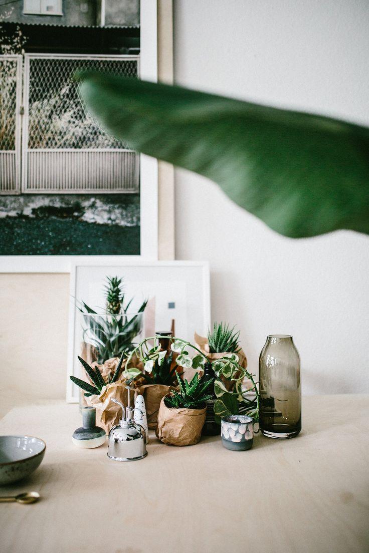 Die 365 Besten Bilder Zu Home I Pflanzen Auf Pinterest   Deko ... Haus Mit Wintergarten Zimmerpflanzen Als Dekoration Szene Setzen