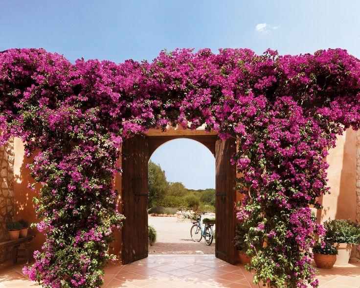 Al llegar la primavera, la entrada de la casa se cubre con una espectacular buganvilla color rosa intenso.
