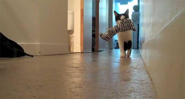 8 σημάδια που δείχνουν ότι η γάτα σου είναι... σκύλος (video) http://bit.ly/1nQDUxg