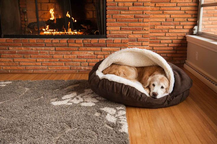 The Snoozer Cozy Cave nesting dog bed is one of a kind dog bed that is designed to give your pet a cozy place to stay warm. Often referred to as a Nesting dog bed, it is perfect for pets and dogs who enjoy staying under the covers.