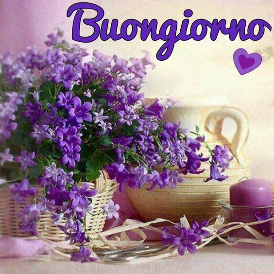 686 best images about immagini di buon giorno on pinterest