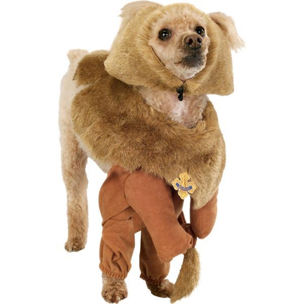 40 best Pommy Box for Pomeranians images on Pinterest ...