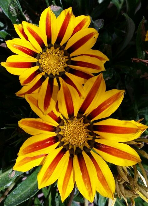 Red and yellow flowers.