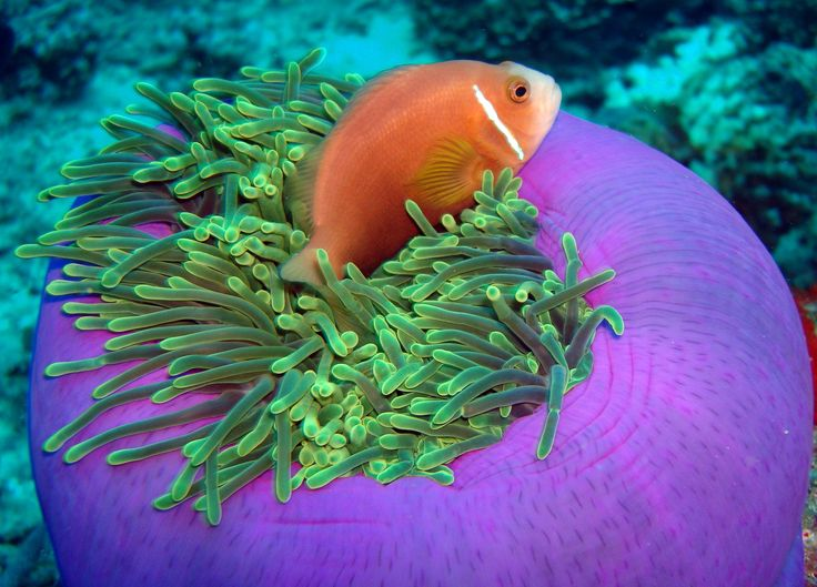 30 ottobre 2013: Vakarufalhi, Maldive. Quante meraviglie custodite in questo mondo sommerso!