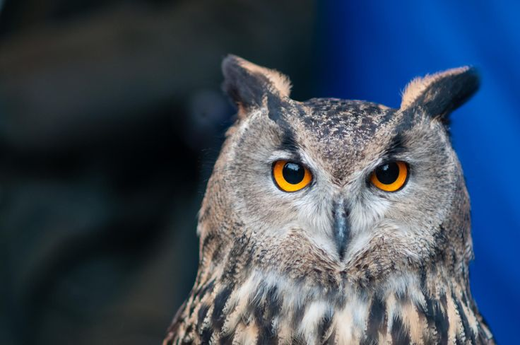 Give a hoot (too) by Stephen Topp on 500px