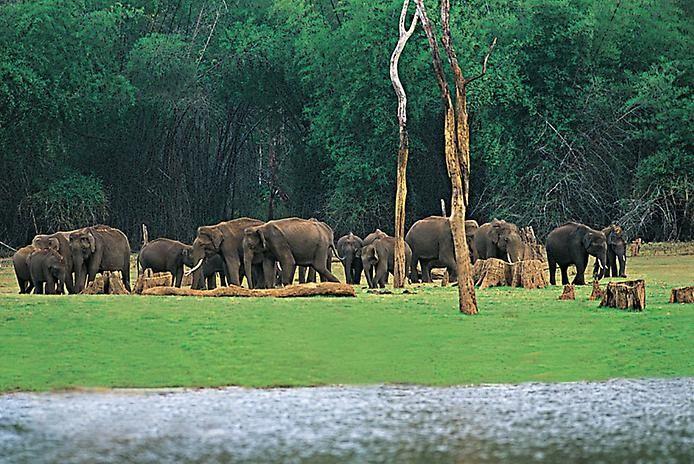 Керала. Райский тропический уголок - Путешествуем вместе