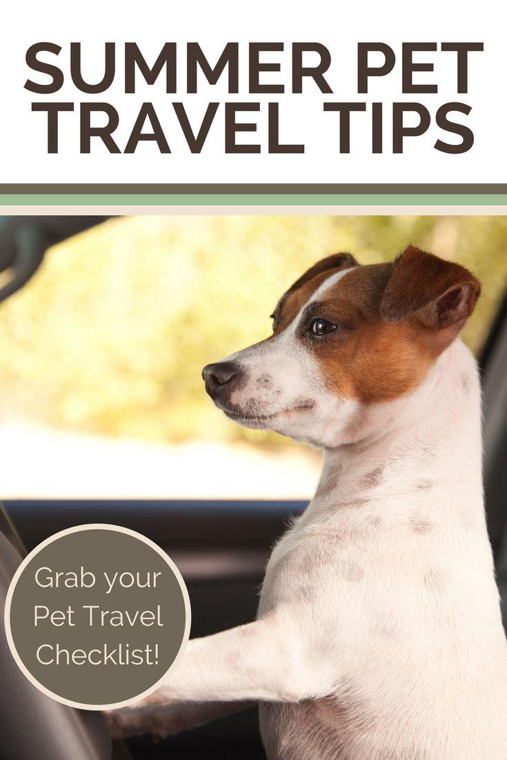 Summer time Pet Journey Ideas