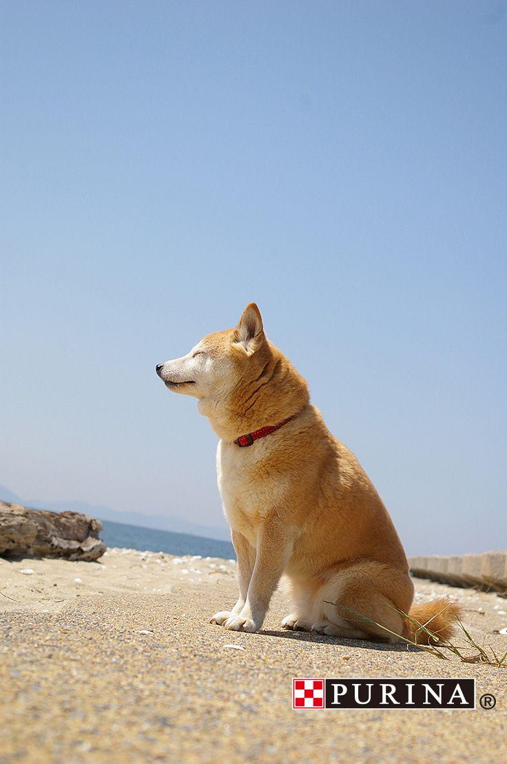 初夏/summer/海/犬  海いいワン♪波の音いいワン♪きもちいいワン♪