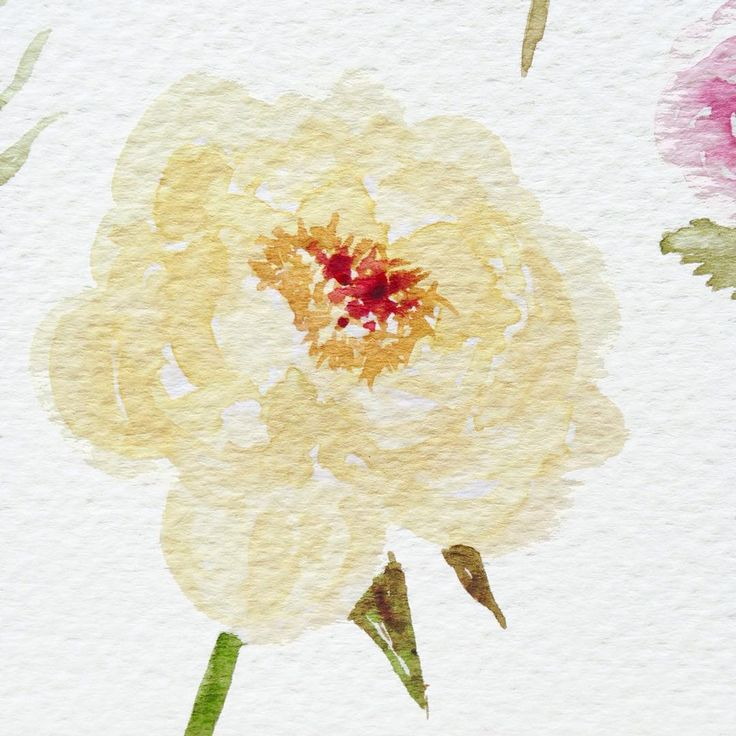Watercolor peony by Irene Zuccarello