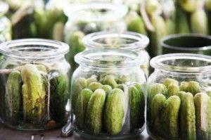 komkommers, klaar om augurk te worden