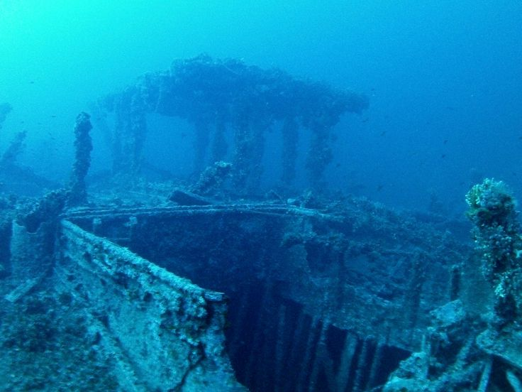 """Le Polynesien was a French Freighter sunk in WWI. Being 145m long, it lies at a depth that varies between 53m and 70m. This wreck has been nicknamed the """"Plate Ship"""" because of the number of artefacts still on it. Photo by Brian Azzopardi, Atlantis Diving Centre."""