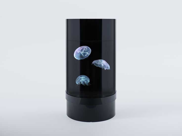 The easiest, most affordable jellyfish tank ever created. And live jellyfish shipped to your doorstep!