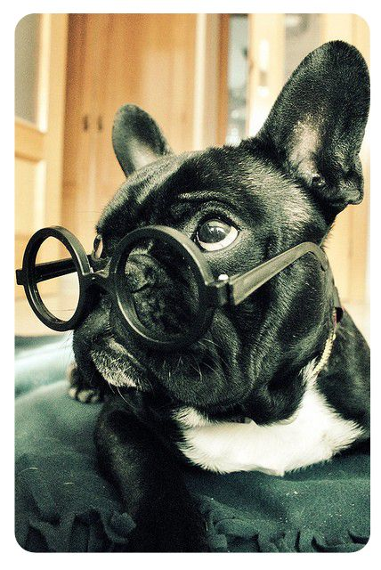 French bulldog: used to own one named Oxford.  Miss him Much!  Will get another one day. My favorite dog breed!