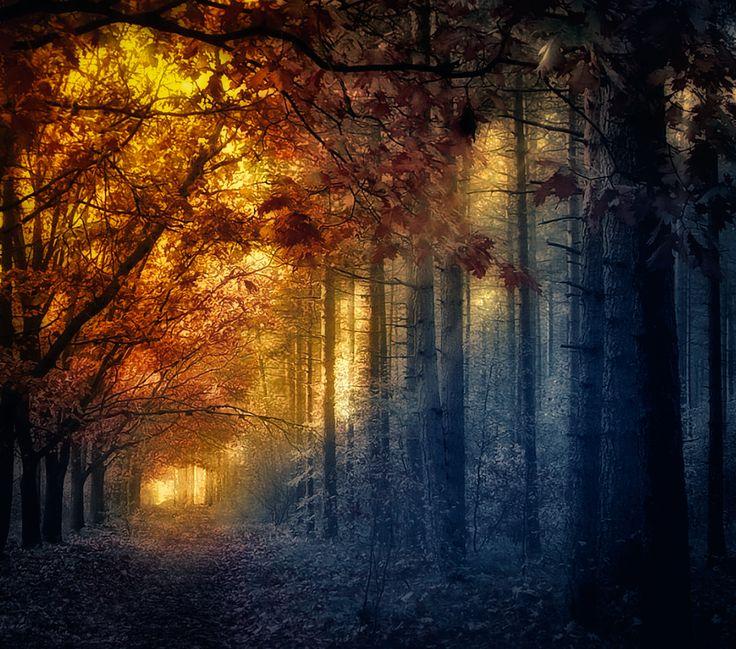 Photograph El bosque magico by Jose Luis Mieza on 500px