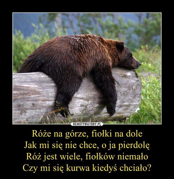 Róże na górze, fiołki na dole Jak mi się nie chce, o ja pierdolę Róż jest wiele, fiołków niemało Czy mi się kurwa kiedyś chciało? –