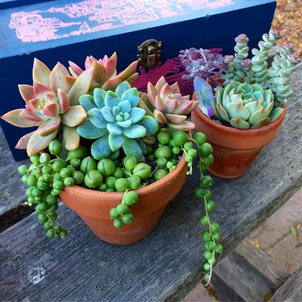 Colorful Cacti - Colorful succulents are a great way to add new hues to a room without committing. You can buy these desert rose cacti—and the more brightly-colored grafted cacti—at Home Depot.