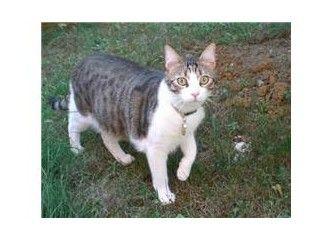 Kedi pirelerine karşı ucuz, kolay ve doğal yöntemler