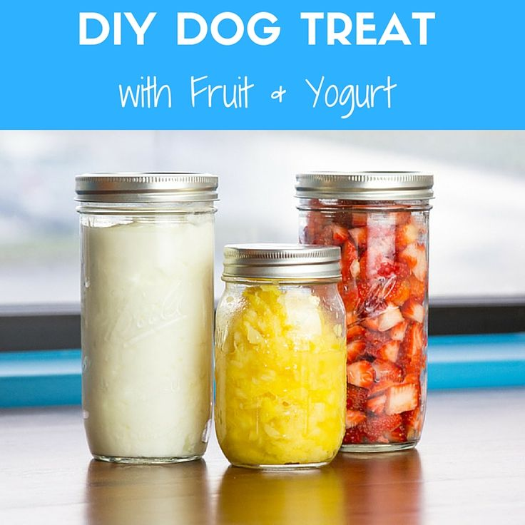 Summertime Frozen Dog Treat: Plain Yogurt, Fresh Strawberries & Pineapple come together with Cow Hooves and Trachea Chews for a Delicious Snack!