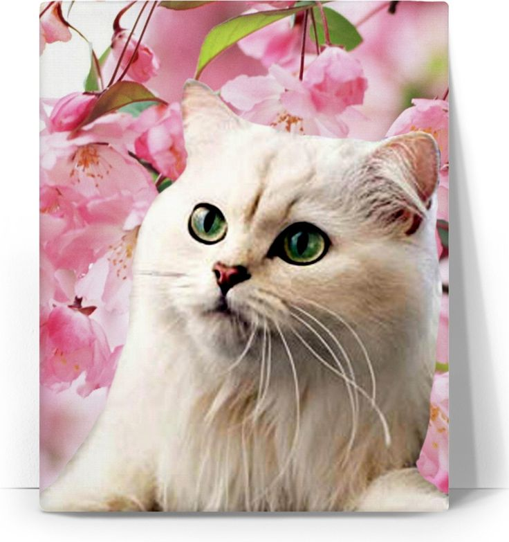 Check out my new product https://www.rageon.com/products/cat-and-flowers-art-canvas-print?aff=BWeX on RageOn!