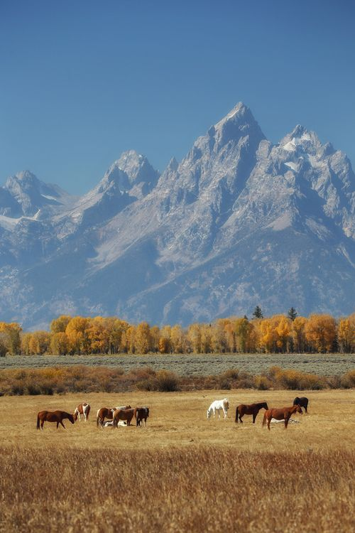 Again, Wyoming.  Absolutely perfect ~ meadows, fields, mountains, wildlife,  pure country.  My kinda place!  Lodging:  http://AffordableYellowstoneRentals.com