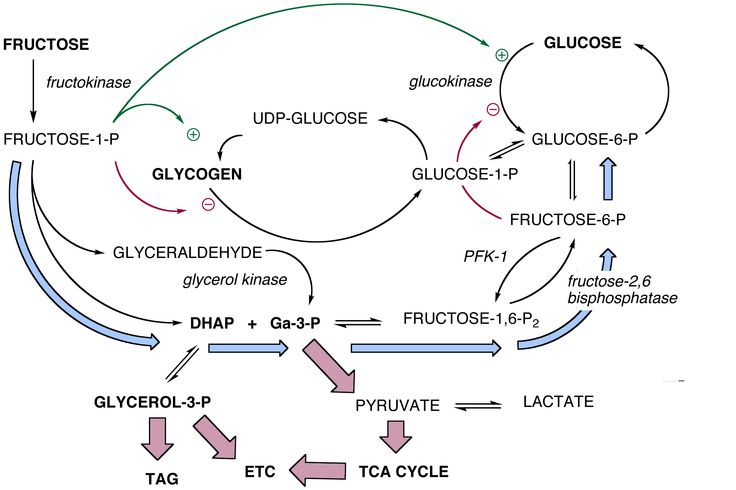 theories and perspectives in biology biochemistry The biological perspective these review notes by  tina fuller gaby perez vanessa espinoza  objectives of the unit: describe and evaluate the cultural context and.